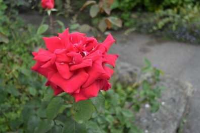 RED_0538