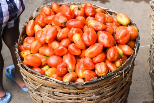 Basket of Tomatoes and