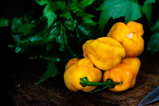 Yellow Scotch Bonnet Peppers Isolated on Black background with green leafy vegetable spinach in background for Nigerian and West African cooking, dark food photography and rustic concept